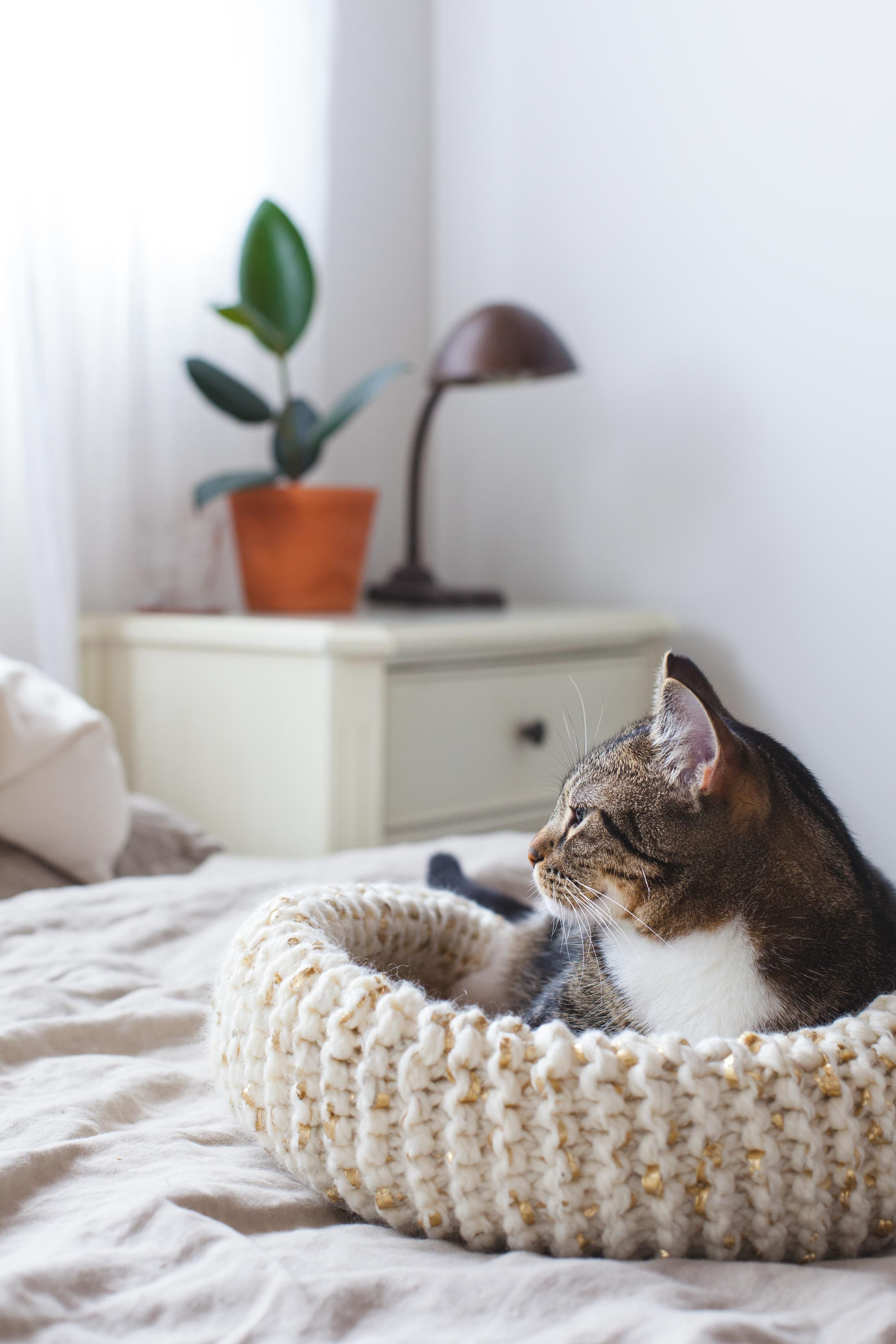 How to Knit the Purrfect Cat Bed | Knitted cat, Cats ...