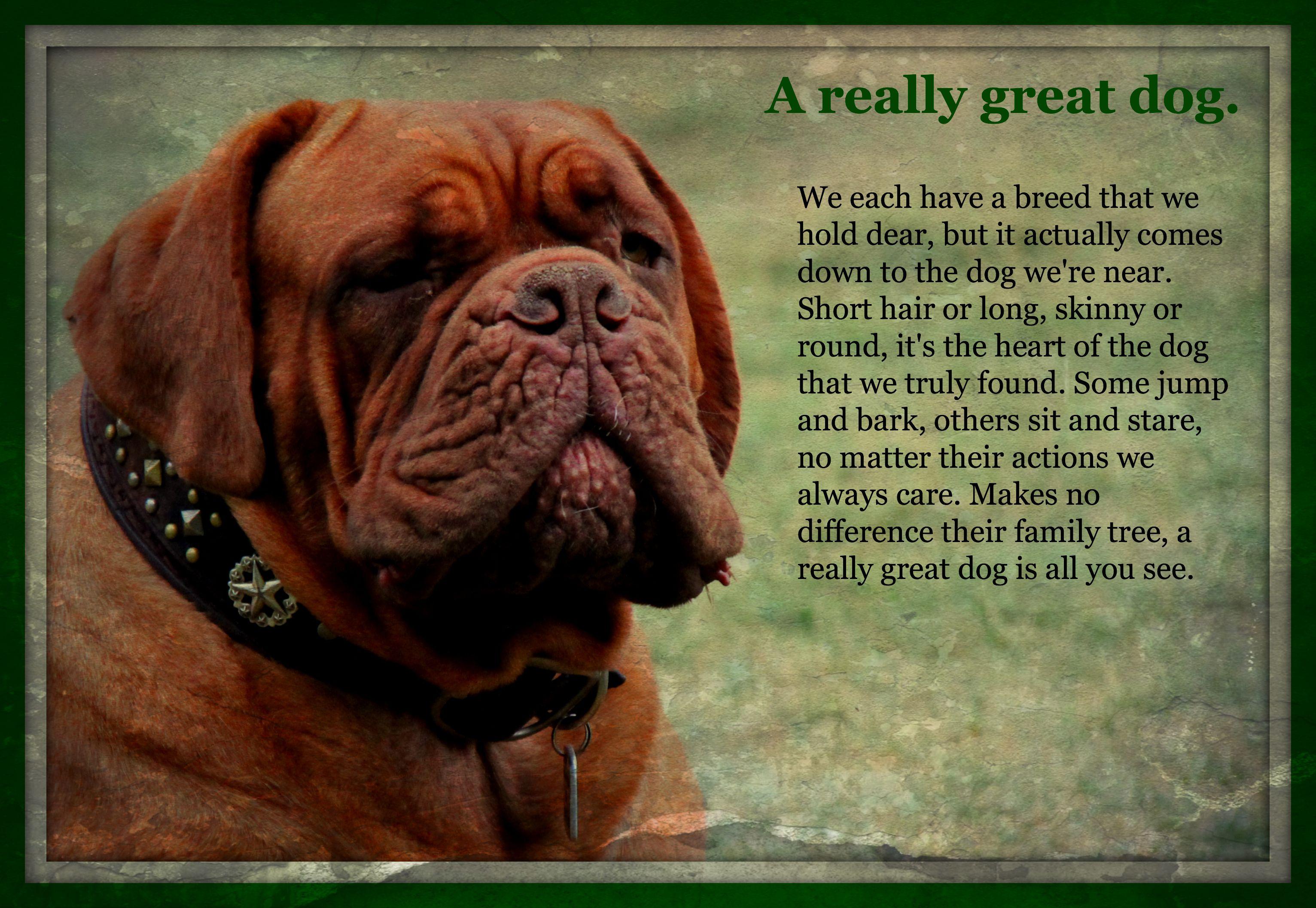 Lone Star Dog Ranch Mastiffs British Mastiff Giant Dog Breeds