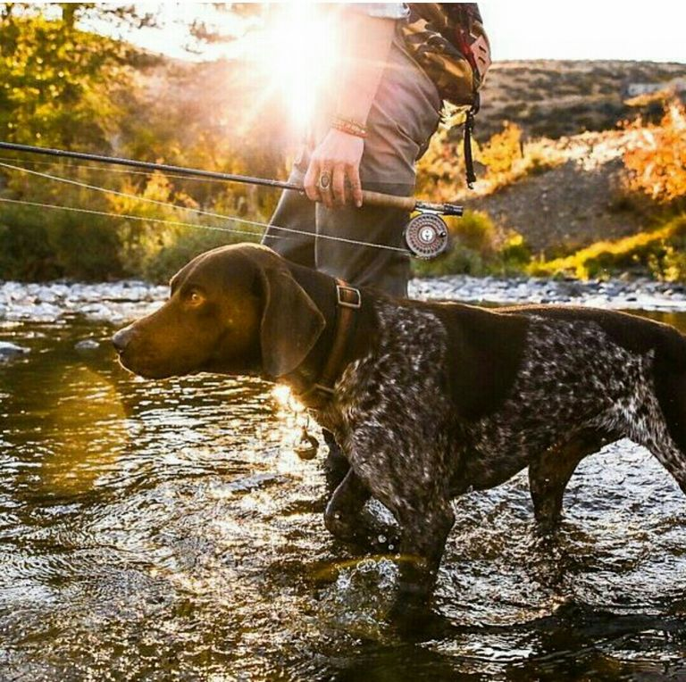 Wanitamalas Want To Start Fly Fishing Among The Various Fishing Techniques Fly Fishing Is Uniquely Unique This T Fly Fishing German Shorthaired Pointer Dogs