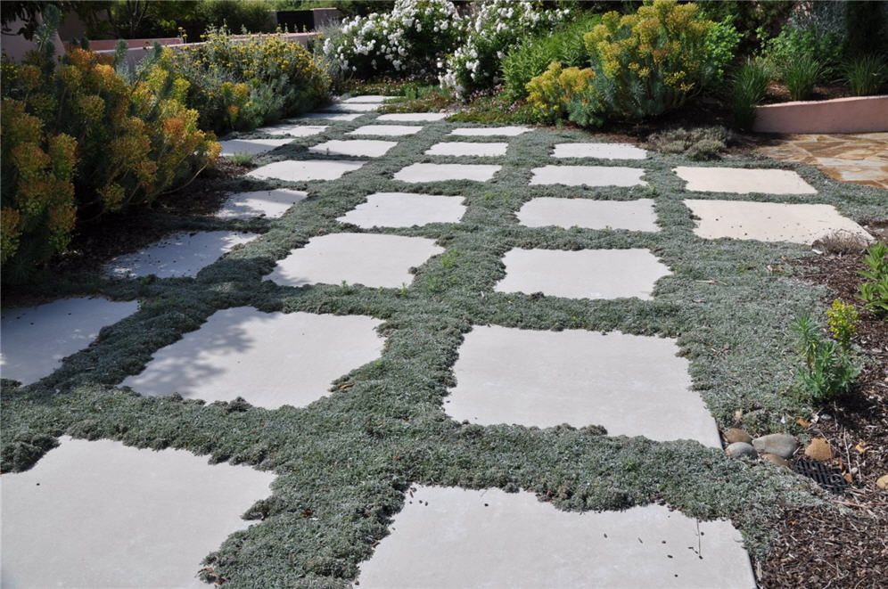 Silver carpet dymondia is a petite member of the daisy for Drought tolerant ground cover full sun