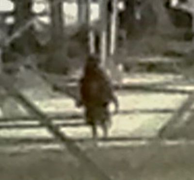 Photo of an unknown entity that has been making it's rounds at the Gas Plant in Kenedy, Texas