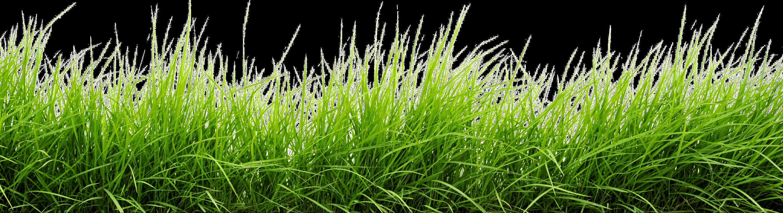 line of grass png image grass photoshop grass wallpaper garden illustration grass png image grass photoshop