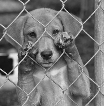 SOMEBODY PLEASE SAVE A LIFE AT YOUR LOCAL SHELTER....