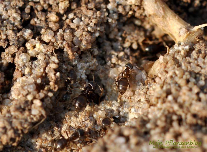 Fabulous Ameisen bek mpfen Meine besten Tipps um Ameisen zu bek mpfen