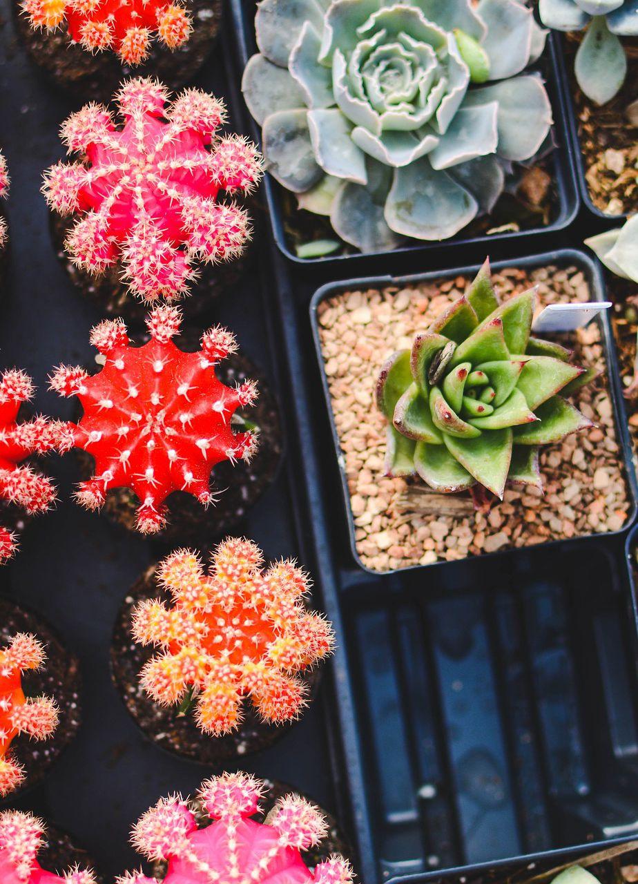 Uprawa Sukulentow W Domu Low Maintenance Indoor Plants Plants Low Maintenance Plants
