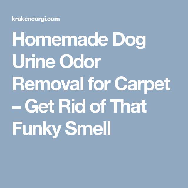 Homemade Dog Urine Odor Removal for Carpet Get Rid of That Funky