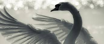 """1. Mythological animals represent our instincts. Jung: """"when it is killed, someone will become conscious. In the story of Percival, the unconscious hero Percival becomes conscious through the shooting of the swan. . . .A bird is a mind animal, symbolically, so the unconsciousness is in the mind. One word more on the theme of immortality. It is intimately linked up with the anima question. Through the relation to the anima one obtains the chance of greater consciousness..."""" 1925 Seminar, pg 1..."""
