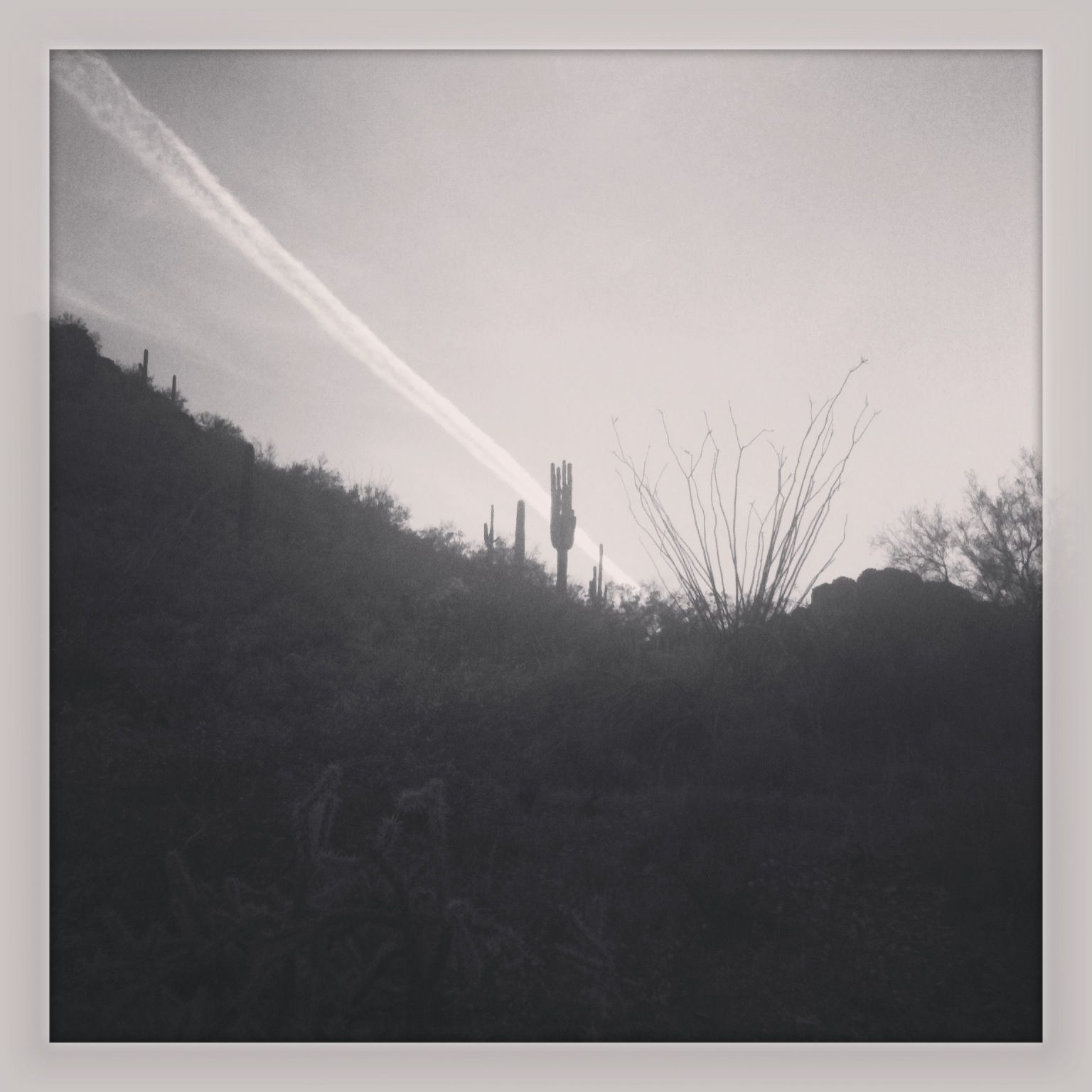 Hostile territory. Sonoran desert, AZ 2013. #travel #nature #desert #rocks #cactus #sunset #blackandwhite #photography