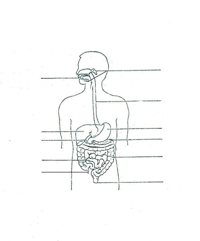 Unlabeled Diagram Of The Digestive System Inspirational