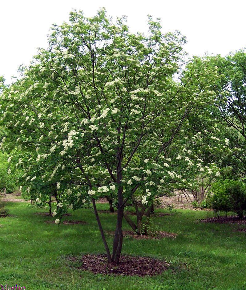 Winter Turns Spring Tree