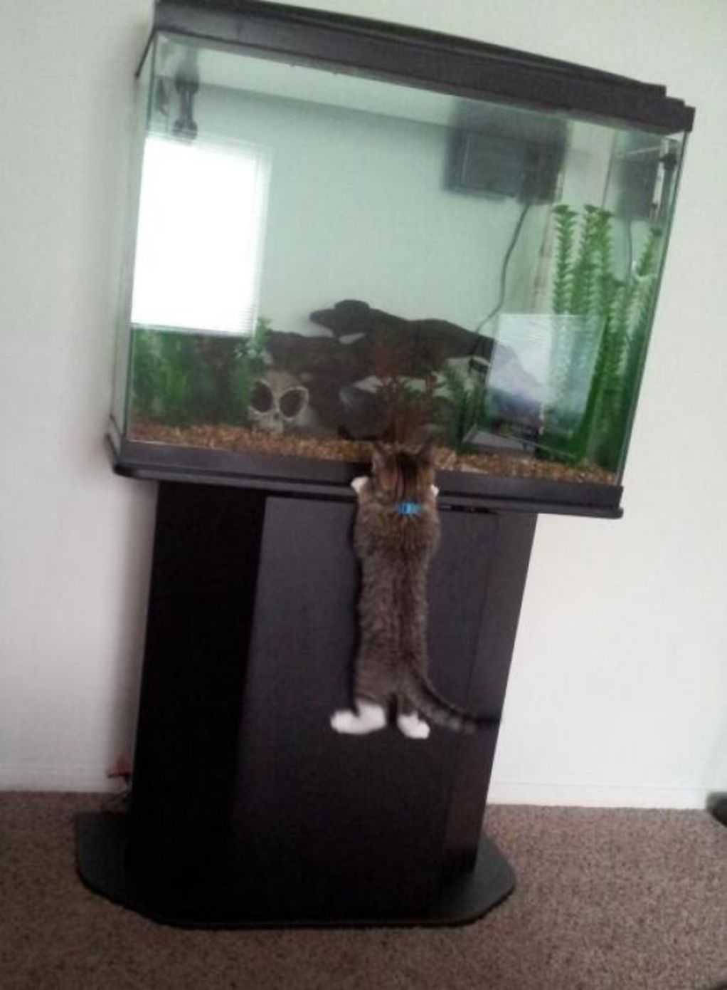 Hilarious Photos Of Pets Caught RedHanded - 23 hilarious photos of pets caught red handed