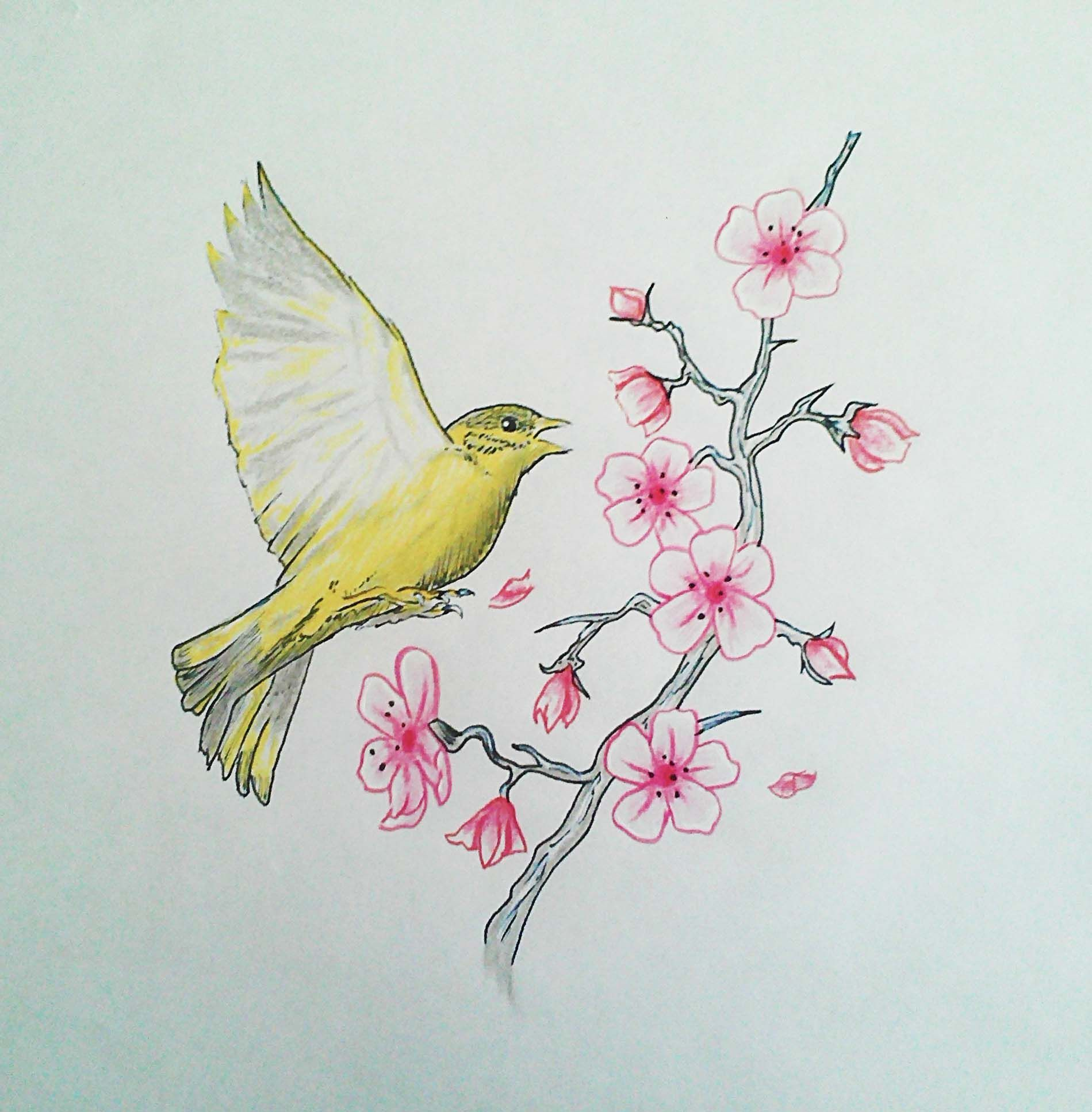 I love the finchs position and detail but i would change the my tattoo design finch bird and cherry blossoms biocorpaavc