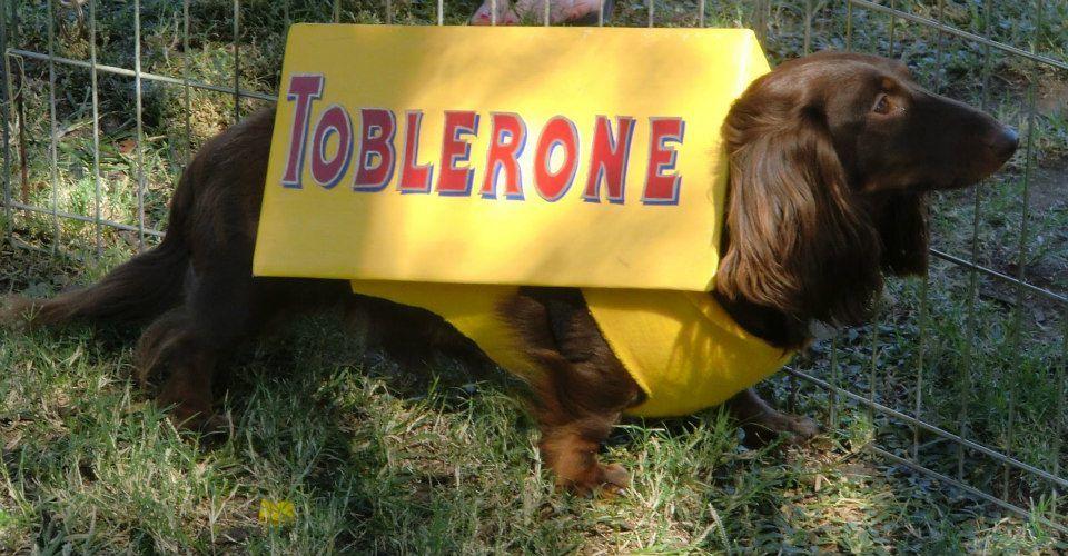 Toblerone Dachshund Halloween Costume Dachshund Toblerone