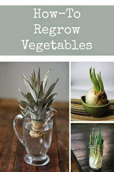 How to Regrow Vegetables | Regrow vegetables, Indoor ...