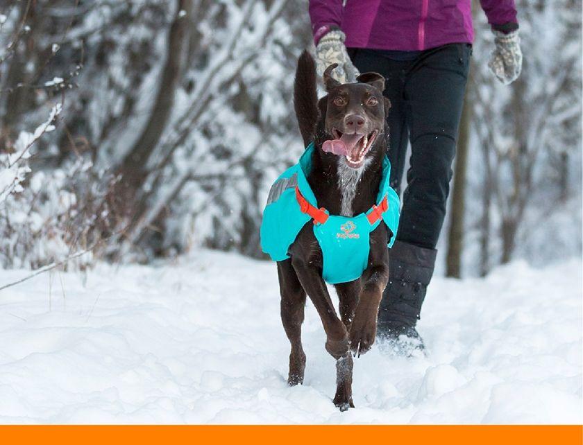 Dog Fashion Lookbook Rc Pets Vortex Parka Doggie Style Dogs Pets