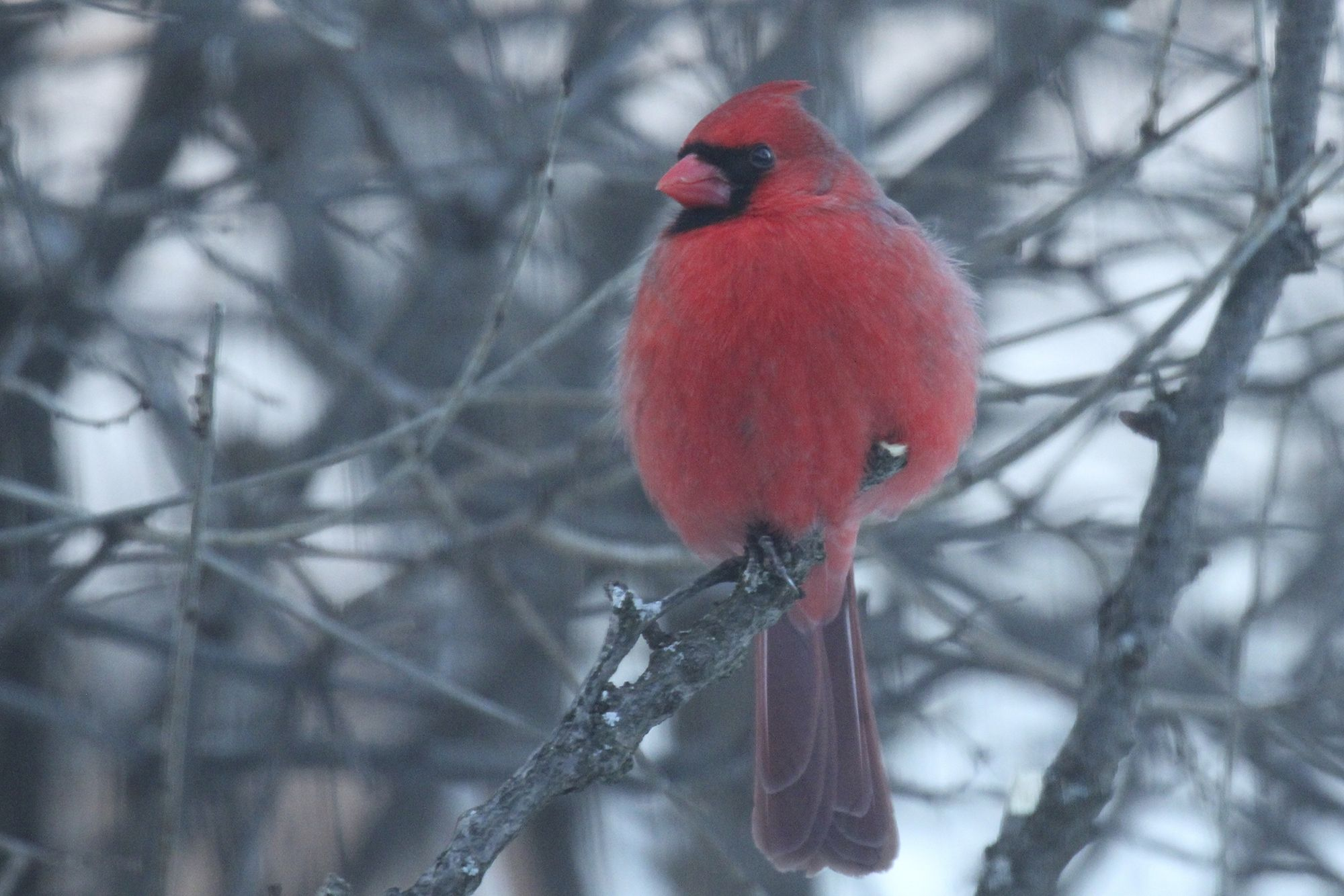 GBBC | Great Backyard Bird Count | Great backyard bird ...