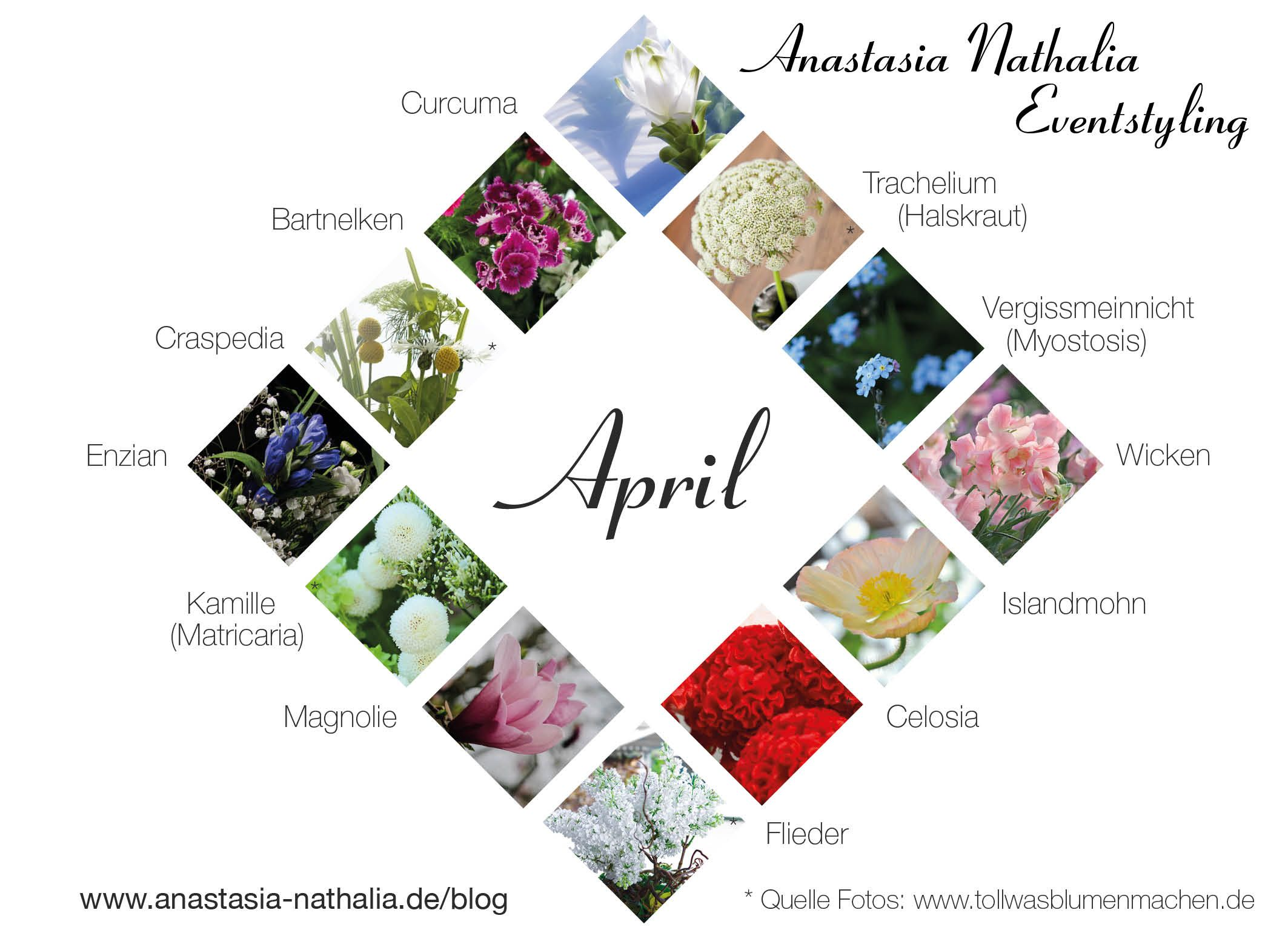Blumen April Fruhling Floristik Hochzeit Hochzeitsblumen Monat Enzian Islandmohn Magnolie Flieder Oktober Blumen Hochzeitsblumen Oktober Hochzeit