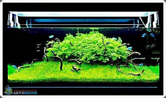 Peralatan Untuk Maintenance Aquascape Aquarium Taman Air