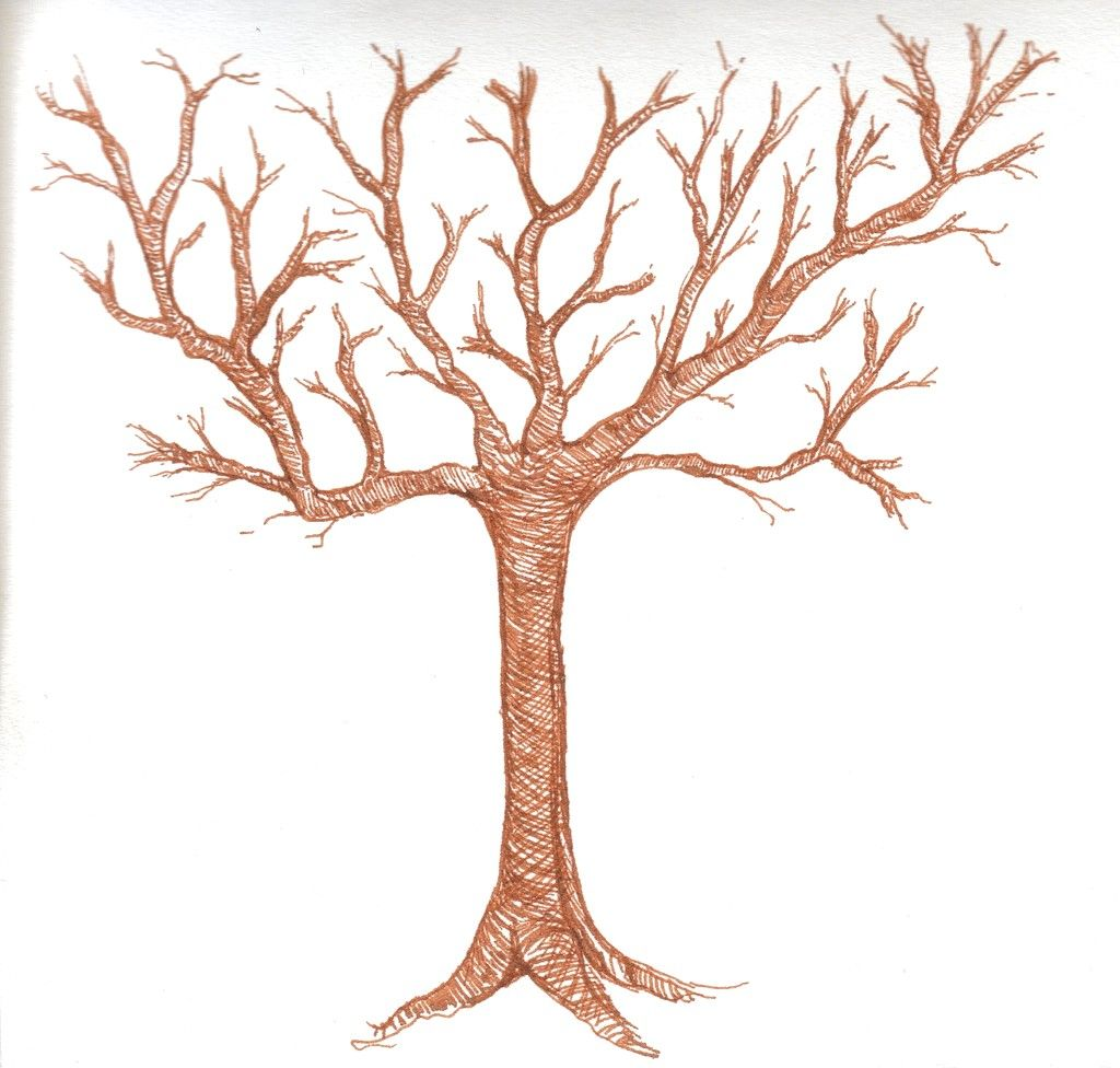 Tree Without Leaves Drawing 58 Cartoon Tree Sketches Maple Tree Tattoos Tree Drawing We made sure that all the steps are very easy to follow because they were all for kids and for beginners starting to discover the drawing world. tree without leaves drawing 58 cartoon