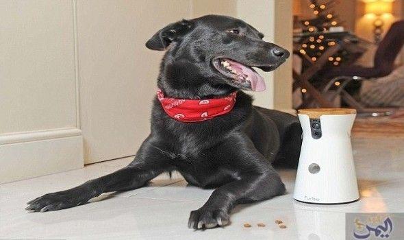 تطوير أداة رائعة تمك ن مالكي الحيوانات الأليفة من التعامل معها عن بعد Dog Owners Animal Lover Dogs