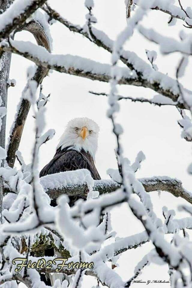 EAGLE, photos