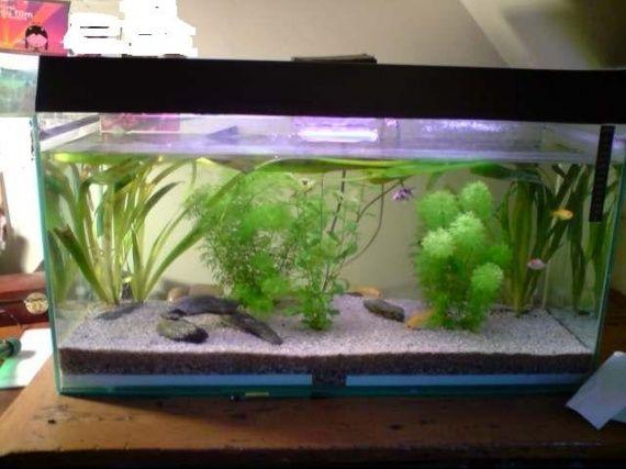 D coration aquarium poisson japonais aquarium for Poisson betta bocal