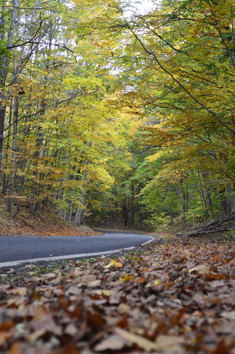 The Tunnel of Trees is a 16-mile scenic drive on the M-119 in ...