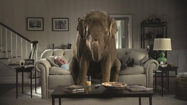 The Elephant In The Room Randy Grasser Pulse Linkedin
