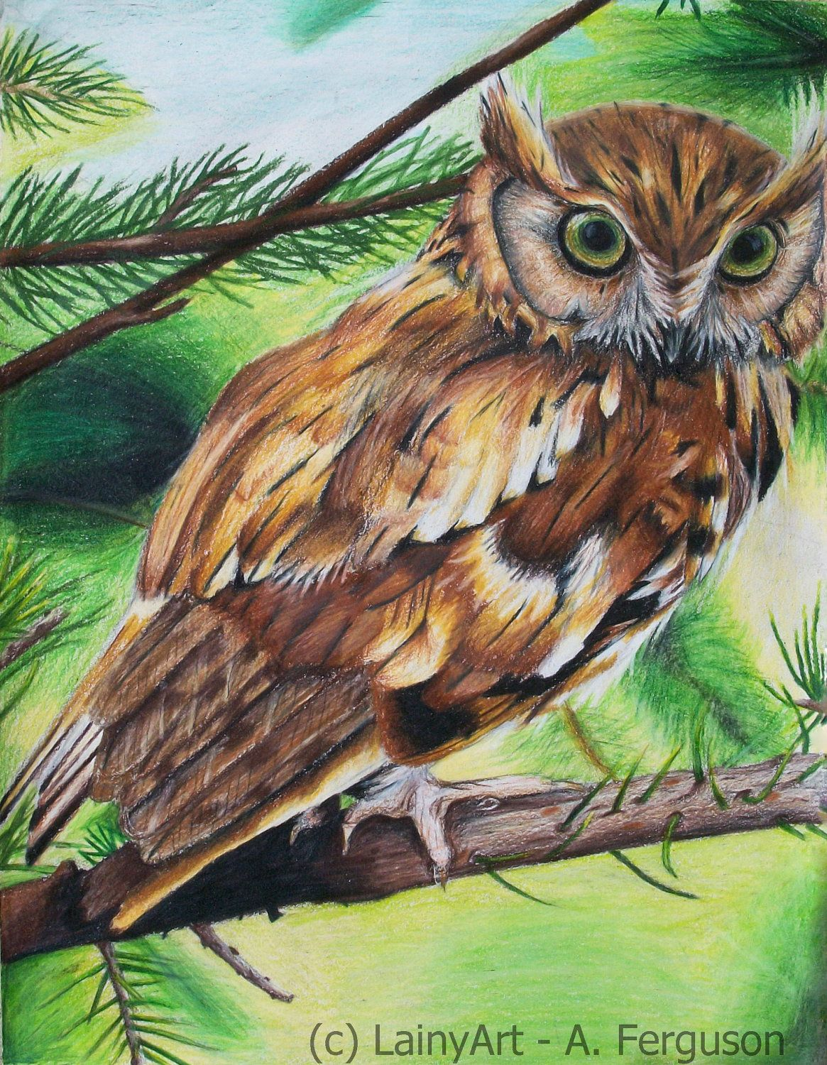 - Owl Drawing 8x10 Stretched Canvas Print Ready To By LainyArt