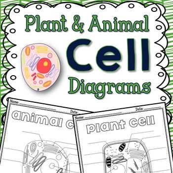 Cells Plant And Animal Cells Diagrams Give You Two Quick Blank Cell
