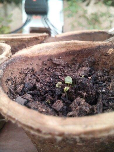 Freshly grown plants