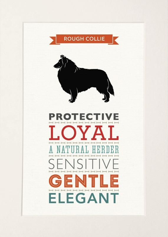 Rough Collie Dog Breed Traits Print Great Gift For Rough Collie