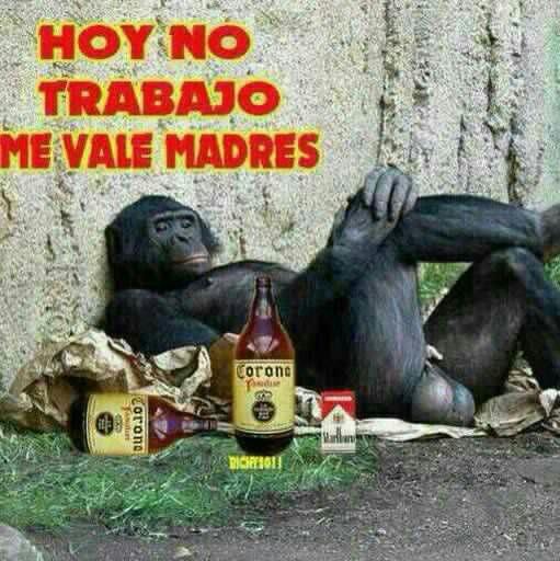 Memes De Chamba Los Mejores Memes En Espanol Funny Spanish Memes Funny Memes Monkeys Funny