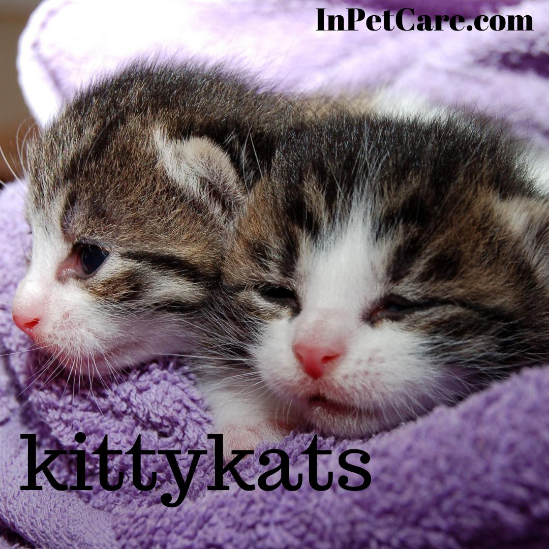 So cute are kittens. cute kittens fluffy cute kittens