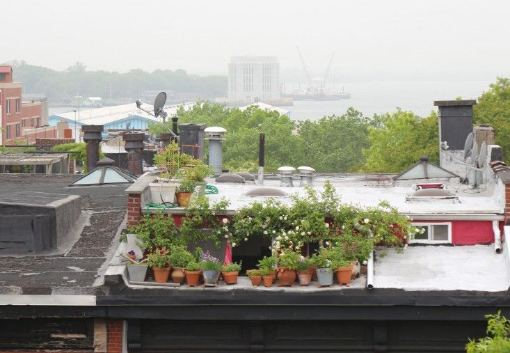 10 Secrets for Growing an Edible Urban Balcony Garden