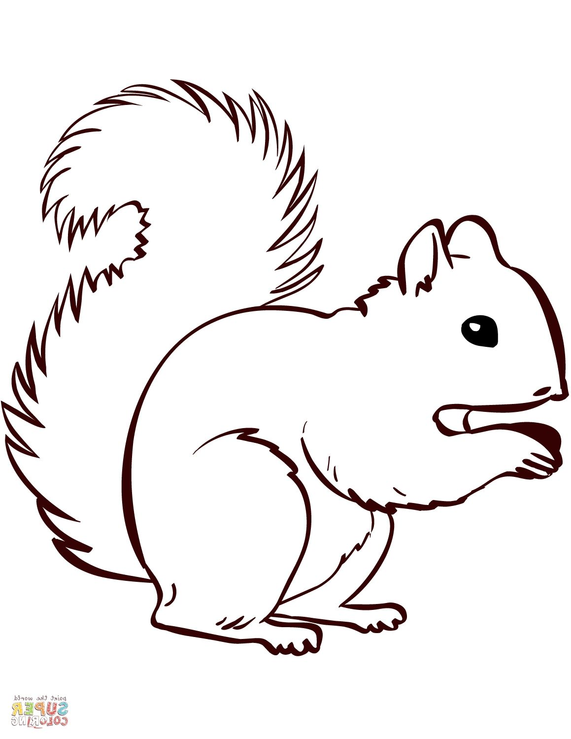 Squirrel Coloring Page Squirrel coloring page, Squirrel