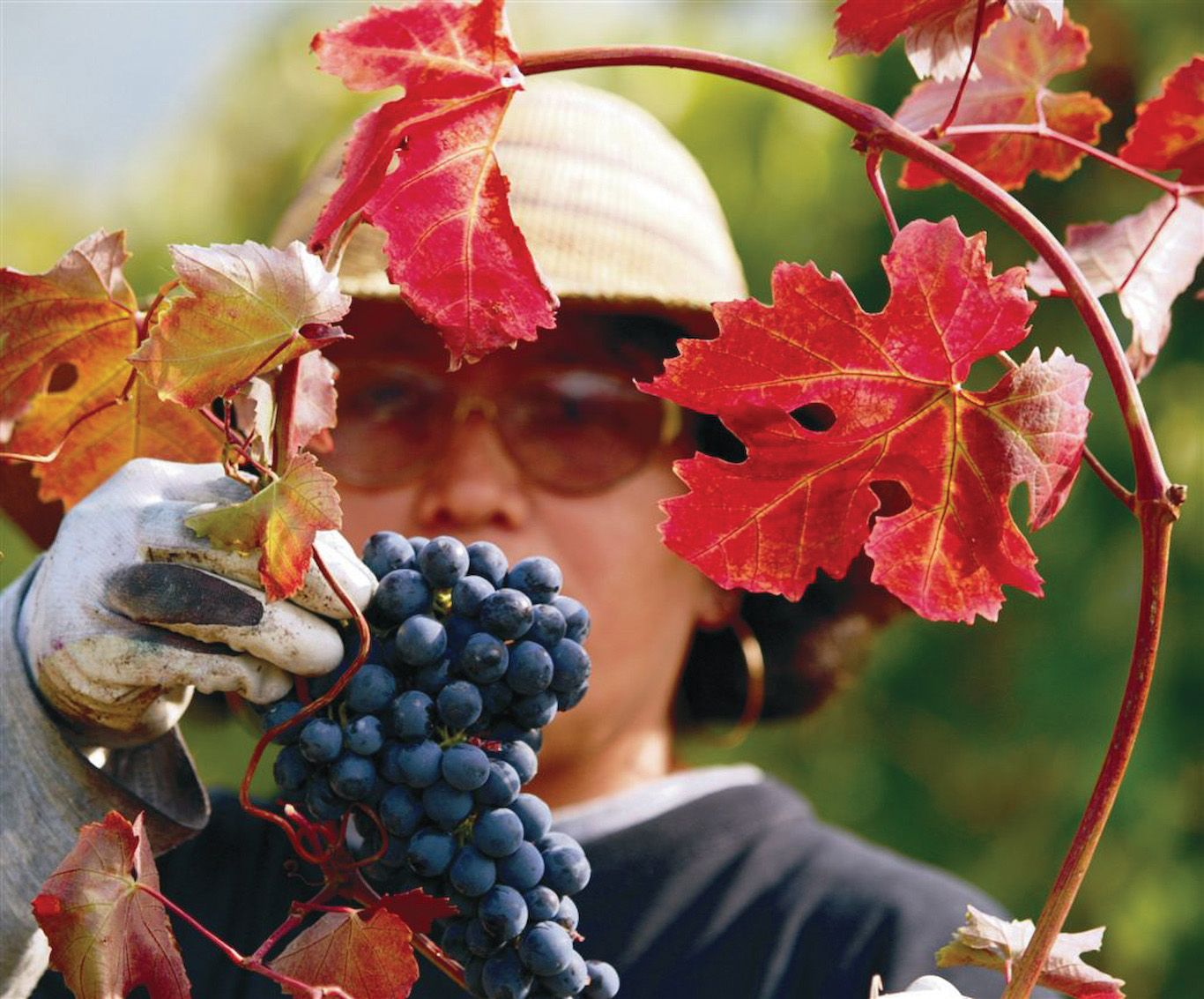 Brooklyn Winery Urban Winery New York Wines Wedding Venue And Wine Bar Brooklyn Winery Winemaking Winery