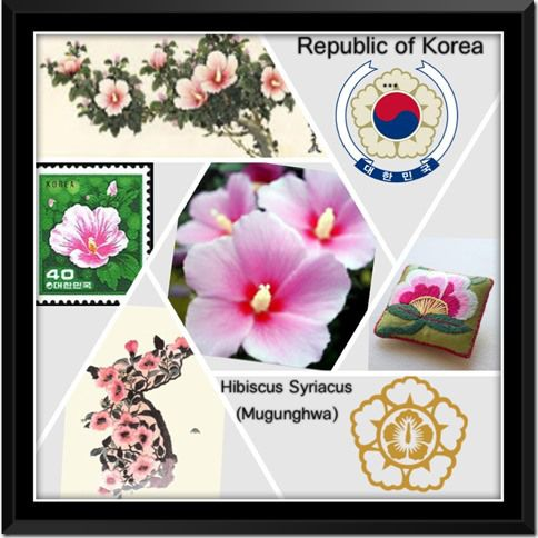 National Flower East Asia 4 Republic Of Korea Hibiscus