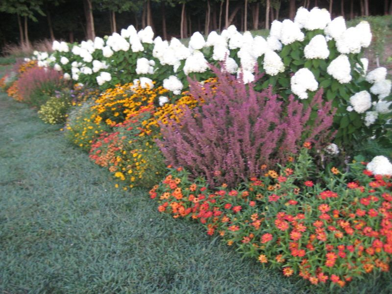 Kerry S Garden 2009 Proven Winners Backyard Flowers Garden Front Flower Beds Limelight Hydrangea