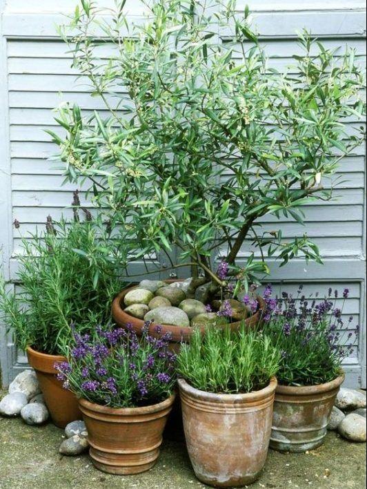 10 Ideas For a Mediterranean Inspired Garden - Melanie Jade Design -   19 planting Patio garden ideas