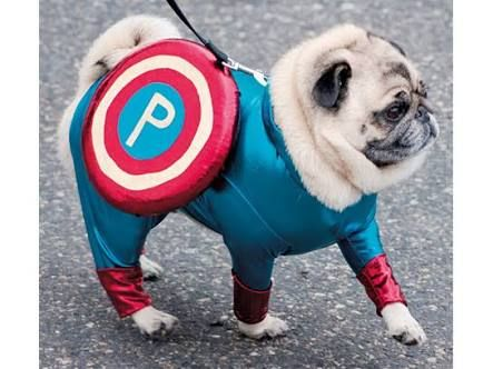 I Ll Be My Own Superhero Pugs In Costume Pugs Funny Pet Costumes