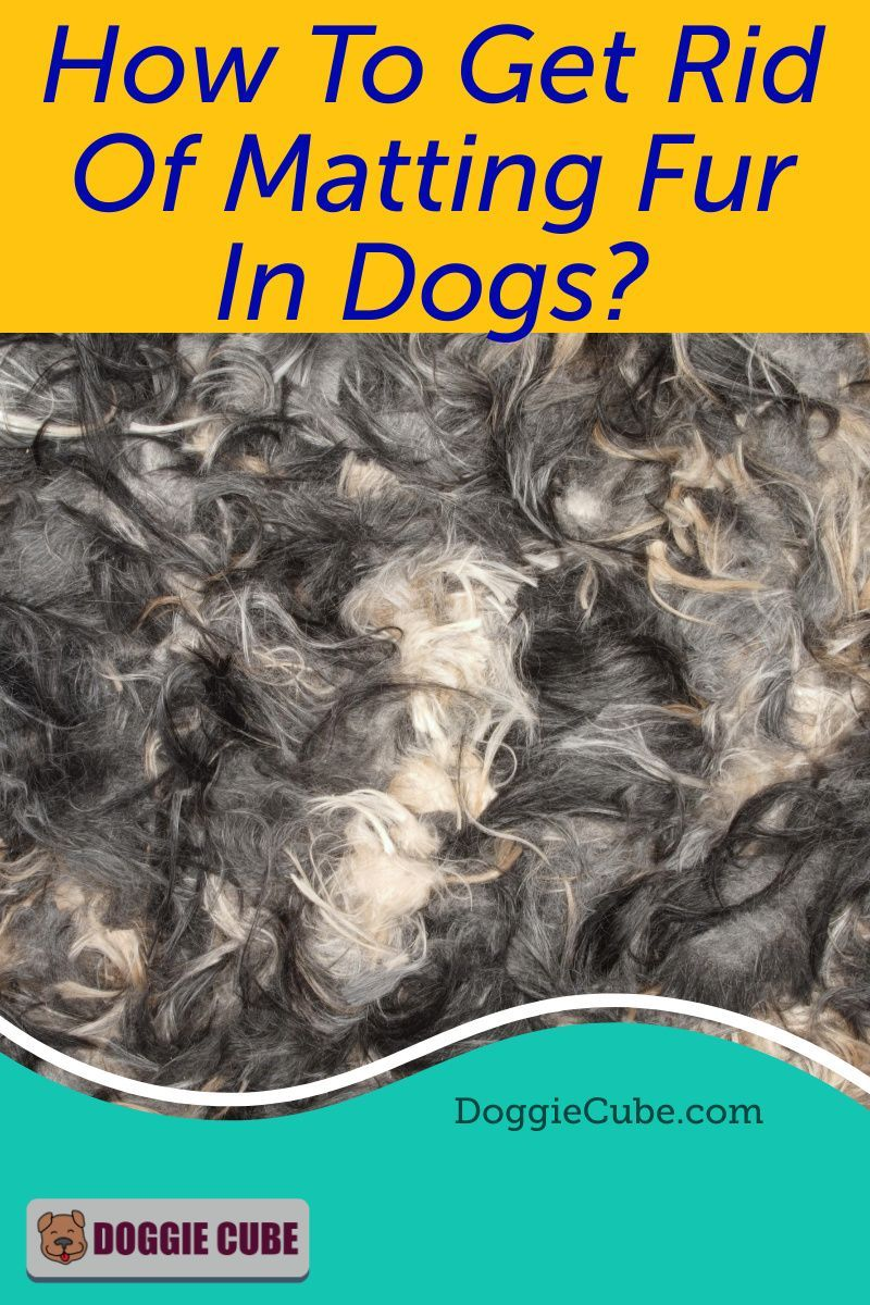 9596159ed93823f60ab998c3ed575f03 - How To Get Rid Of Matted Hair Clumps On Cats