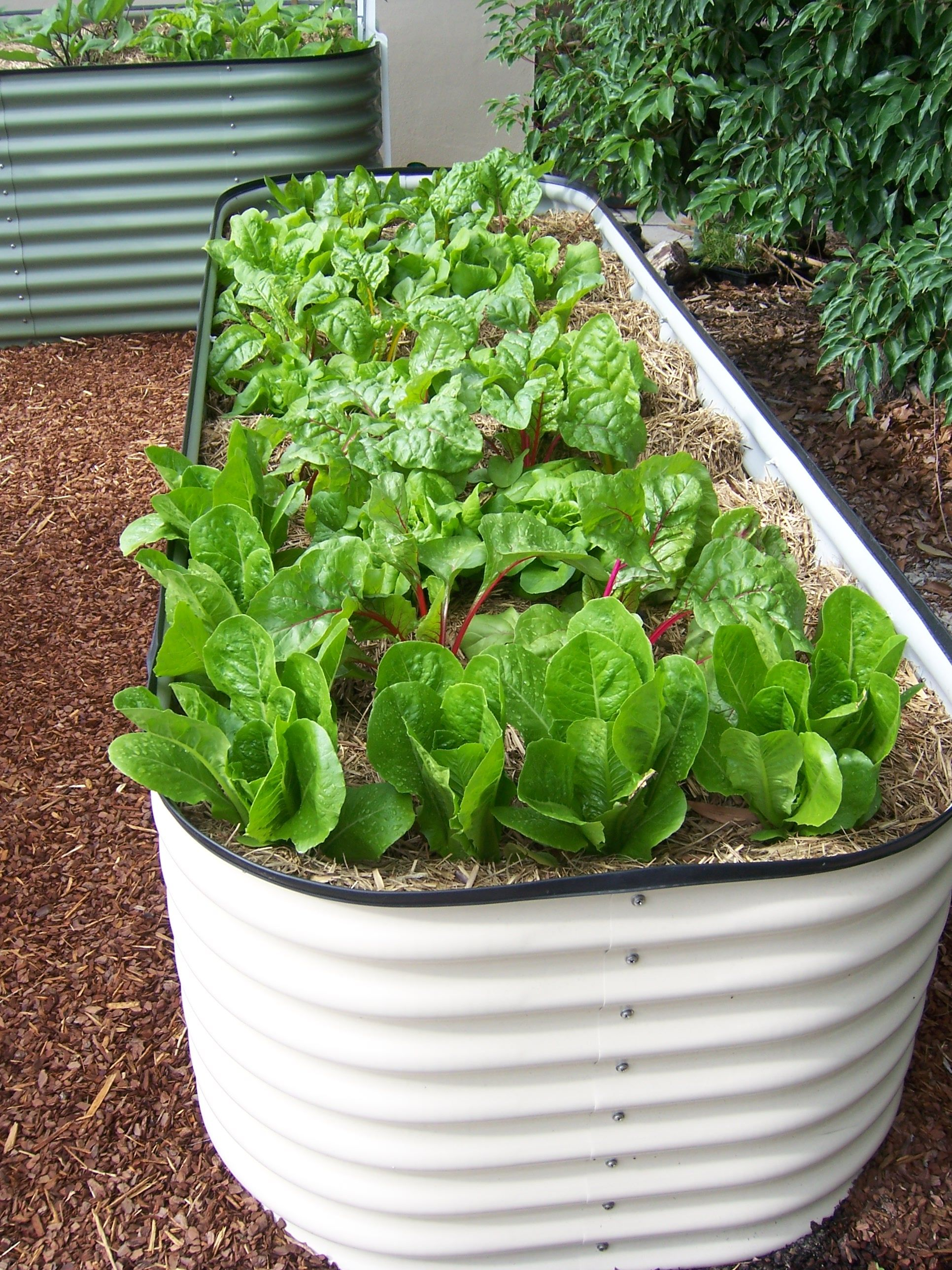 Raised Garden Bed Planting Ideas find this pin and more on raised bed gardening Raised Garden Bed Planting Ideas Cinder Block Raised Bed Ideas Raised Garden Bed Ideas Grumpys Raised