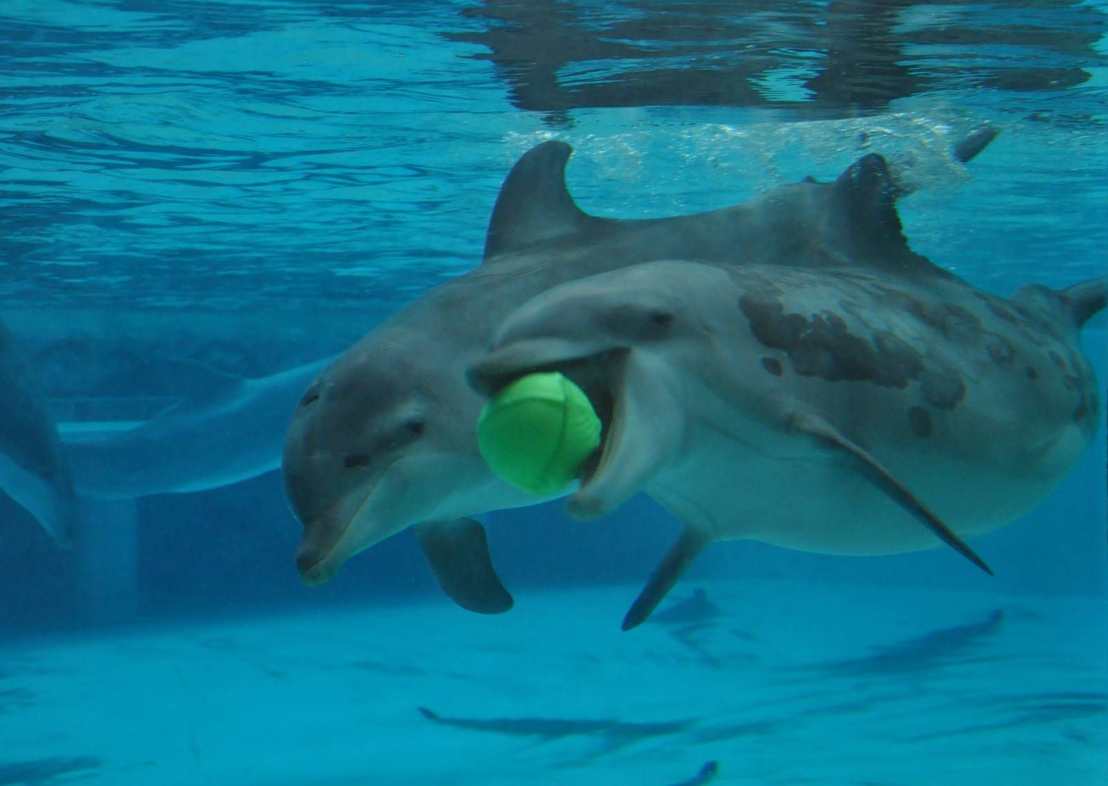 images of dolphins playing -#main