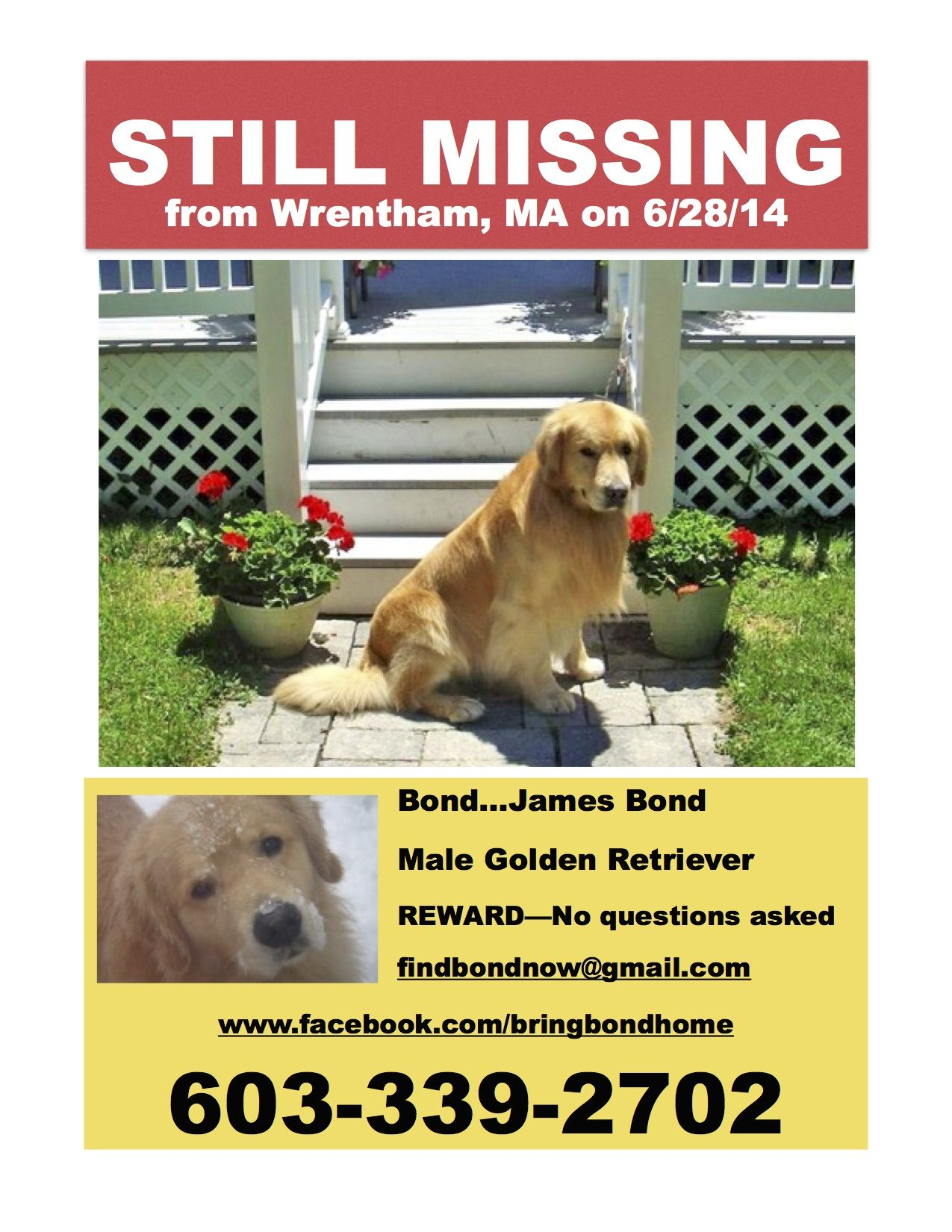 5 5 Year Old Male Golden Retriever Lost Since 6 28 14 Wrentham