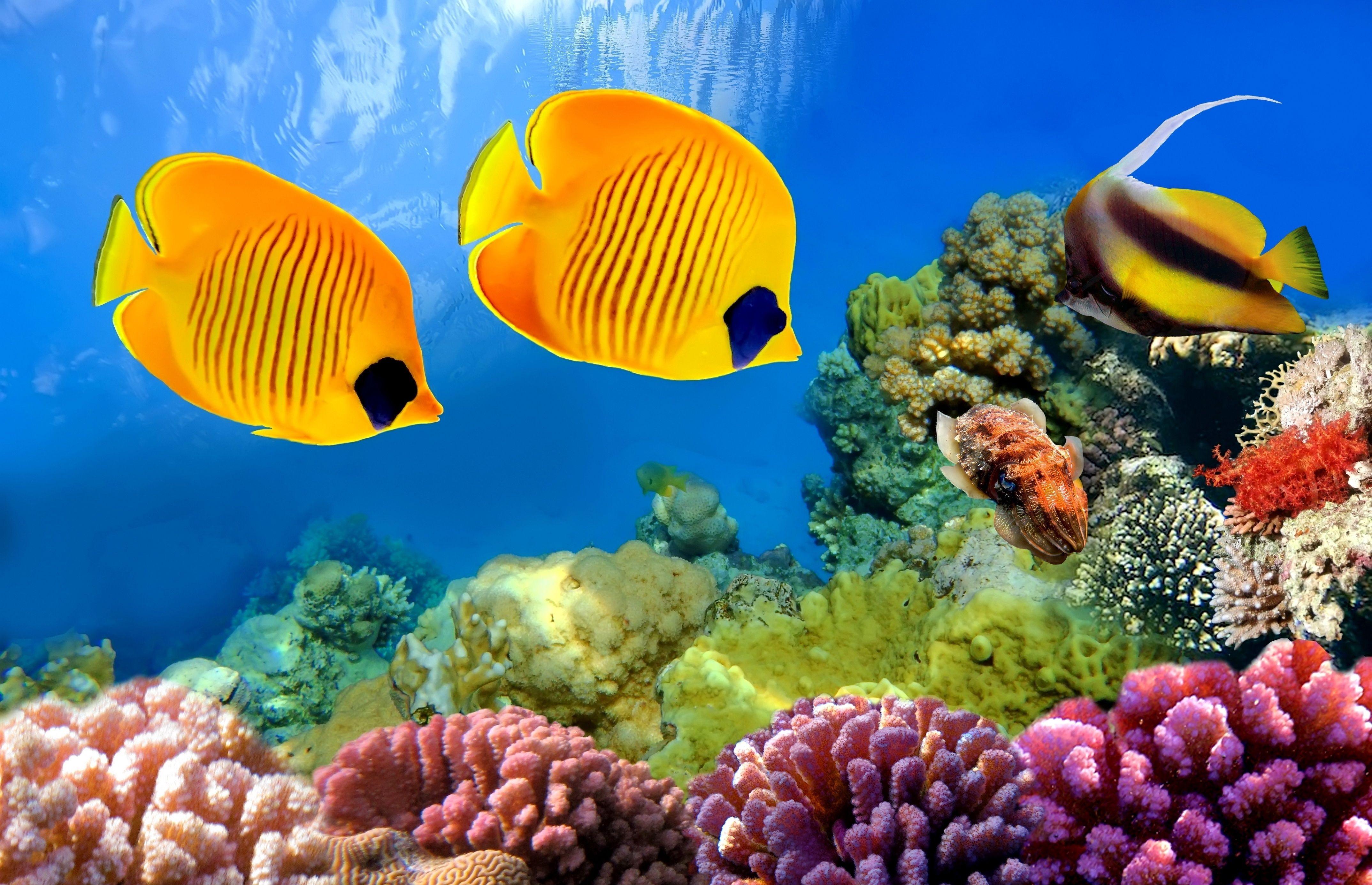 Resultado De Imagen Para Imagenes De Full Hd 4k De Peces Coral Reef Coral Reef Aquarium Fish Wallpaper
