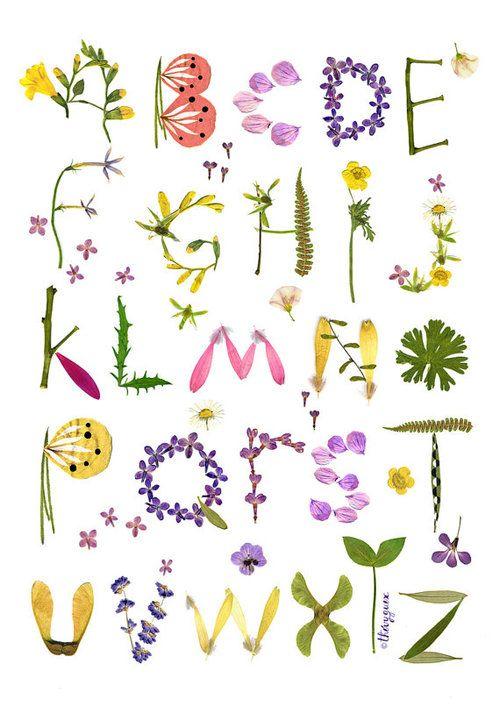 herbarium alphabet flower botanical wall art poster pressed flower typography pinterest. Black Bedroom Furniture Sets. Home Design Ideas