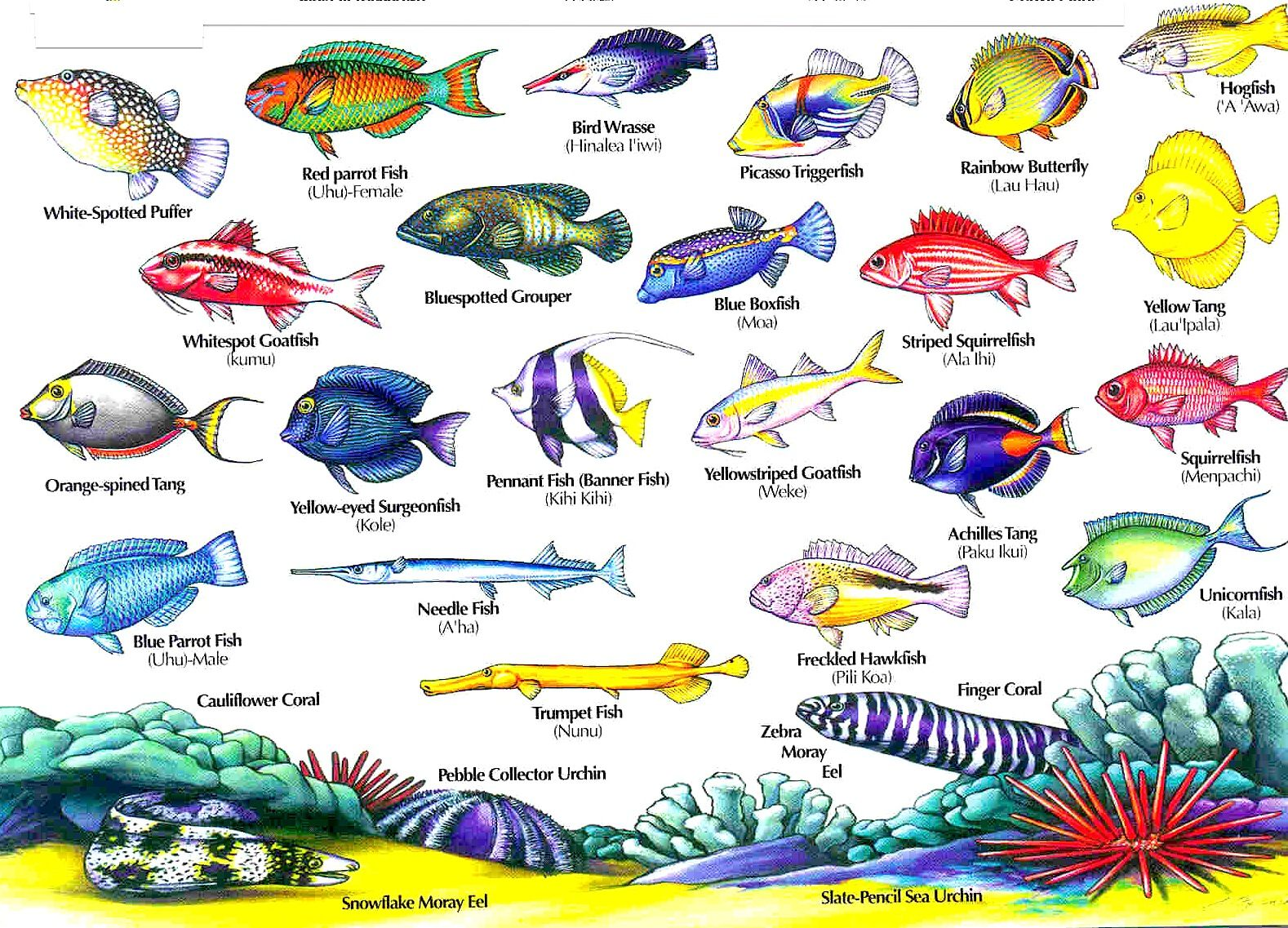 Freshwater fish in hawaii - Hawaii Reef Fish Guide With Hawaiian Names 2 Aloha Joe Blog