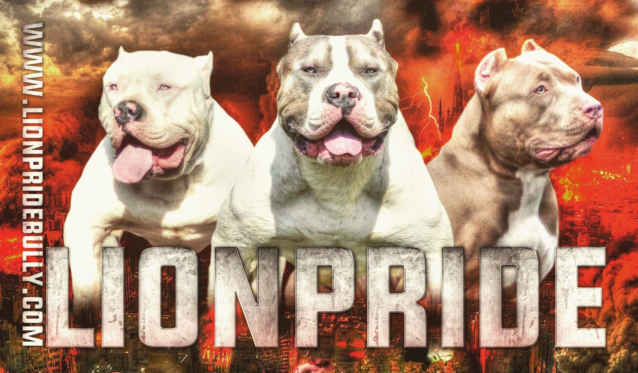 Chiot puppy puppies american bully giant xl xxl bully