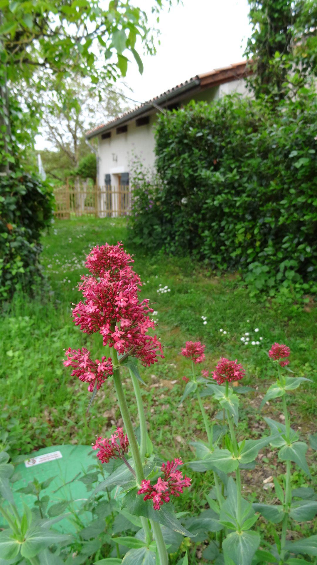 Valériane Toutes les fleurs du jardin Au Grand Champ